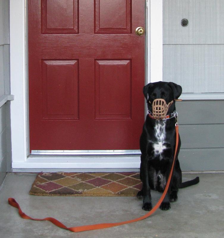 Oliver Twist Dog Training